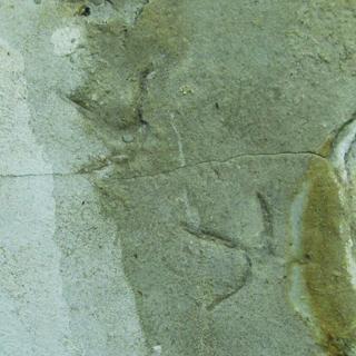 Traces de pattes d'oiseaux fossiles