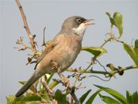 ornithologie avec Olivier Eyraud